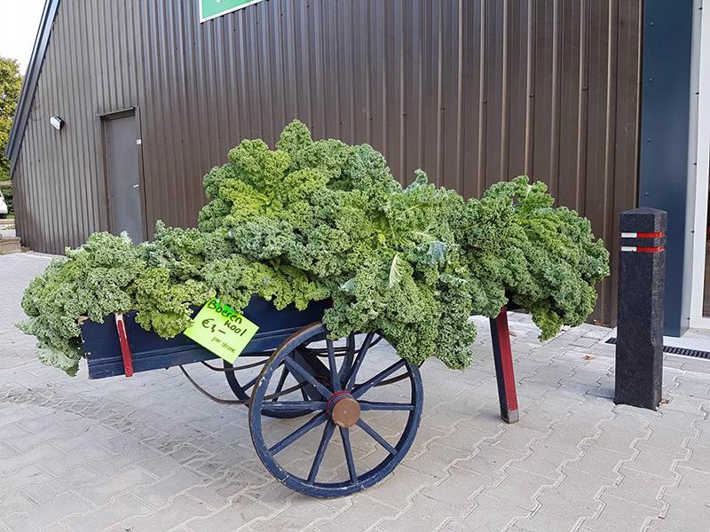 groente_boerenkool_smilande