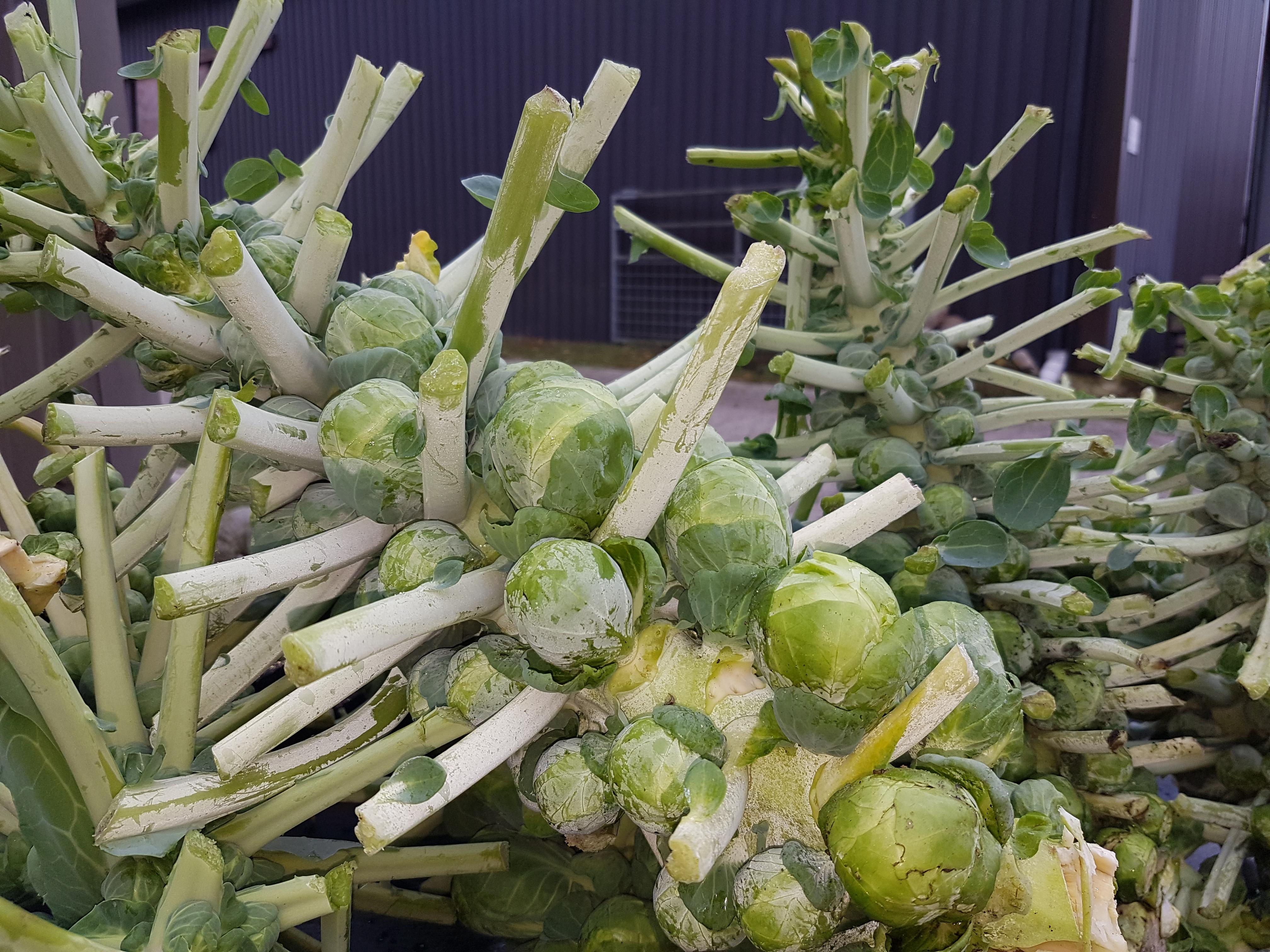 Spruiten_groente_smilande